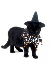 cat in witch costume