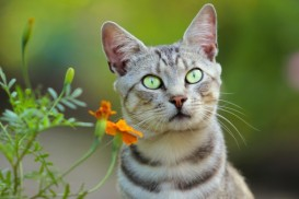 cat with brilliant green eyes