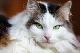 cat with stunning green eyes