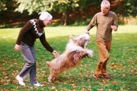 dog and couple playing