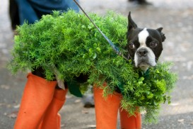 dog in carrot costume