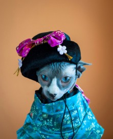 giesha cat