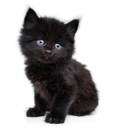 kitten-black-blue-eyes.jpg