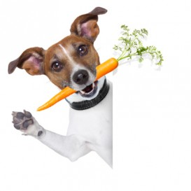 BusterWithCarrot