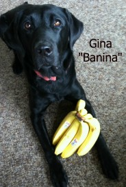 Gina Banina with text