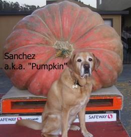 Sanchez Great Pumpkin with text
