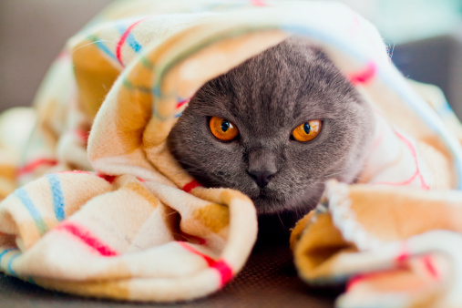 6 Ways To Make A Dying Cat More Comfortable | Care2 Healthy Living
