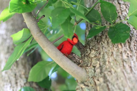 Felted cardinal (Photo by NCC)
