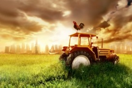 framland tractor rooster