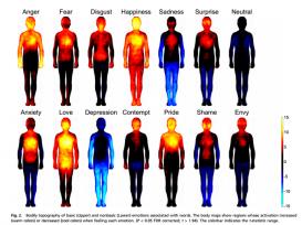 Image credit: Social Sciences - Psychological and Cognitive Sciences: Lauri Nummenmaa, Enrico Glerean, Riitta Hari, and Jari K. Hietanen Bodily maps of emotions PNAS 2013 ; published ahead of print December 30, 2013, doi:10.1073/pnas.1321664111