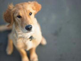 big puppy eyes