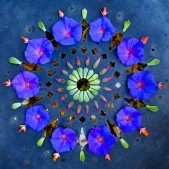 kathy klein flower mandalas
