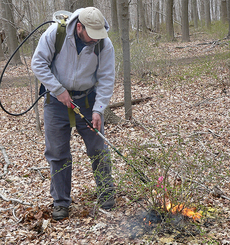 Jeff Ward, chief scientist in the department of forestry and horticulture at the Connecticut Agricultural Experiment Station demonstrates the use of a propane torch. (Photo courtesy of Jeffrey Ward)