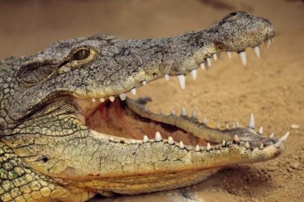 The Shocking 15 Deadliest Animals in the World