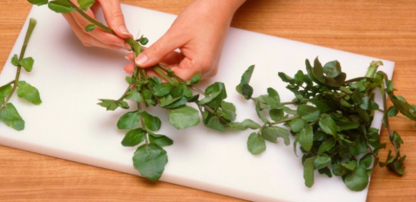 How to Grow, Cook, and Eat Delicious Watercress