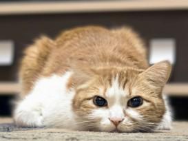 cat sickness warning signs