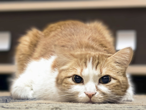 8 Warning Signs That Your Cat May Be Sick | Care2 Healthy Living