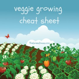 veggie growing cheat sheet