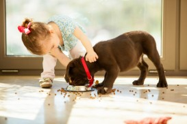 puppy eating