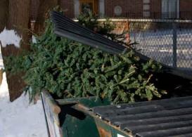 christmas tree holiday waste