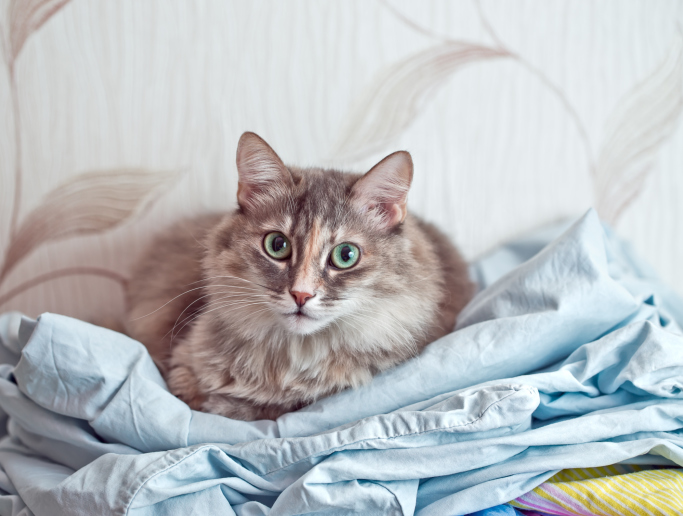 Cat comfortably lies in a fabric linen