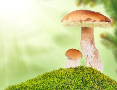 "Mushroom have been considered ""food for the gods' and 'givers of immortality'. Not bad!"