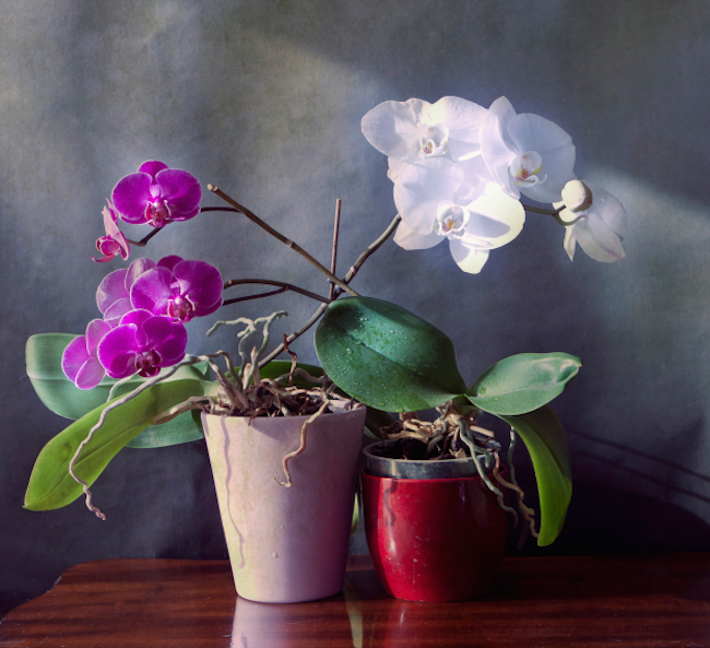 Orchid | 20 House Plants That Clear Out Toxins