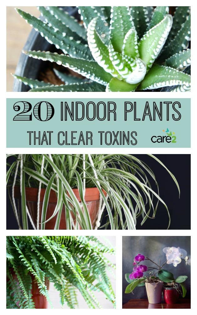 Names Of Indoor Houseplants Safe Html on