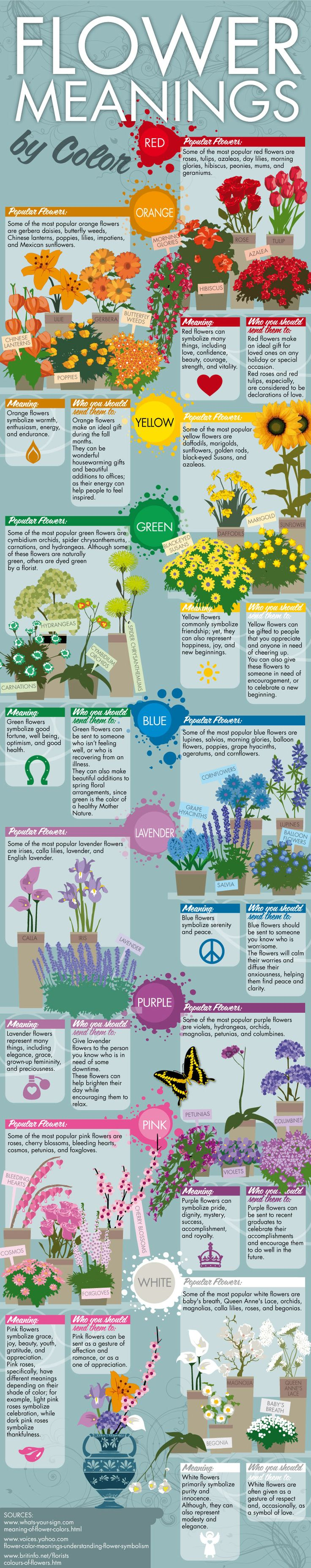 Flower Colors and Meaning