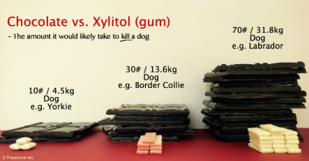PV-Chocolate-vs-Xylitol-Gum-3-Dogs