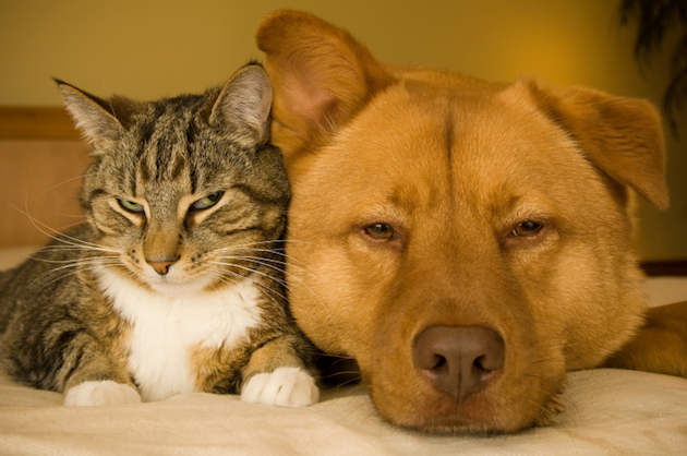 Photo: Cute Cat and Dog