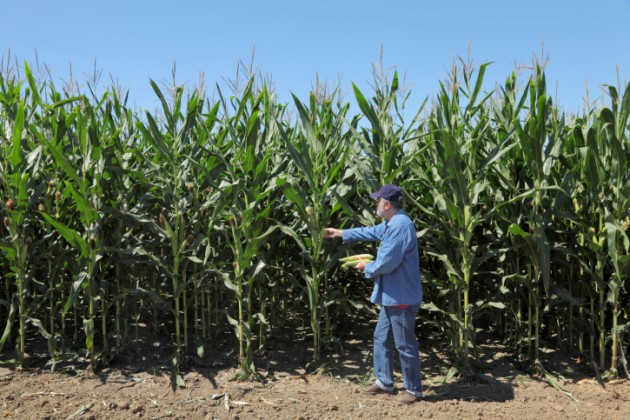 Mono-cropped fields can lead to degraded soils