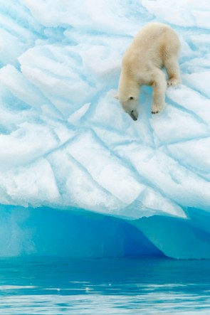 polar bear global warming