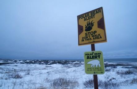 global warming polar bears