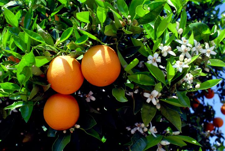 13 Benefici per la salute delle arance
