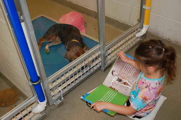 Grab a hankie and check out these amazing kids reading to shelter dogs, to help the dogs overcome shyness and anxiety.
