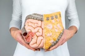 guts intestines stomach