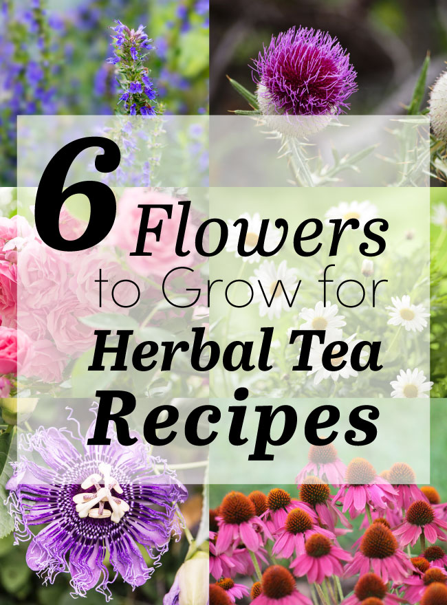 Flowers to plant now for great tea later care2 healthy living herbal tea floral recipes mightylinksfo