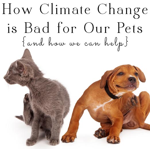 Climate change is creating an ideal habitat for fleas, ticks, and other pests, and that's bad news for your pets. Here's what you can do to keep your pets safe!