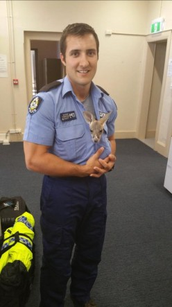 kangaroo adopted by cop
