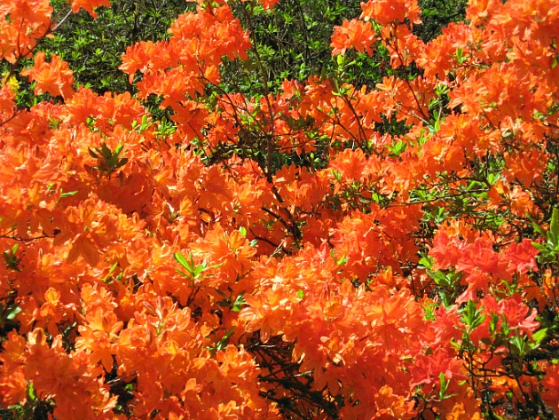8 of the best spring flowering shrubs care2 healthy living related a guide to the worlds best botanical gardens selecting the right tree for your garden 5 simple ways to get your garden ready for spring mightylinksfo