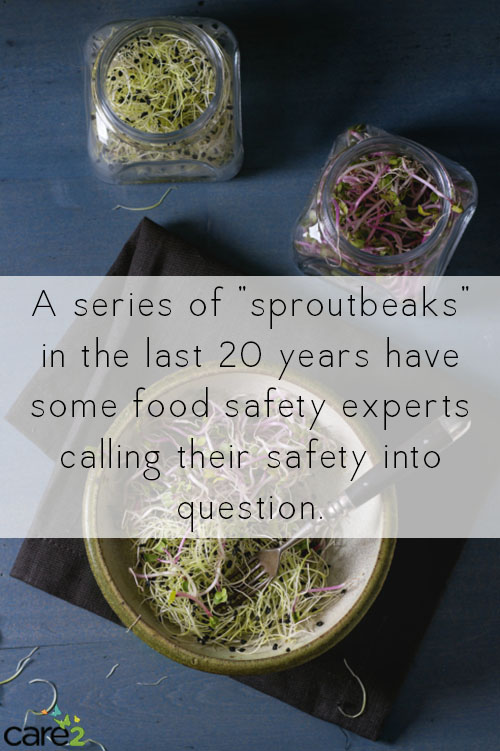 "Sprouts are a pretty ubiquitous sandwich topping, even at more mainstream restaurants, but a series of ""sproutbreaks"" in the last 20 years have some food safety experts calling them into question."