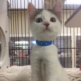 Andy Shelter Cat