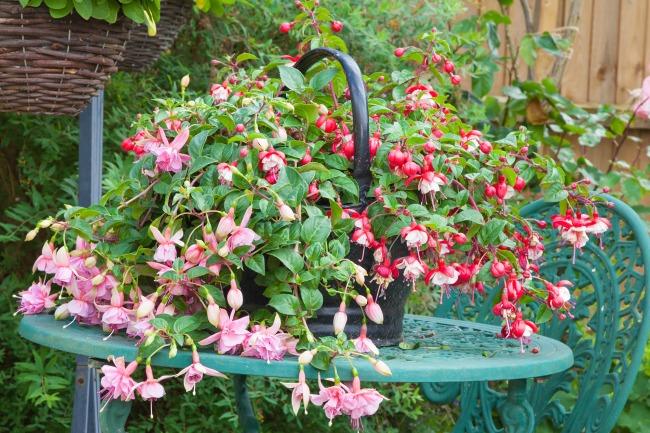 8 plantas de bajo mantenimiento al aire libre para el jardinero ocupado | Curvelado