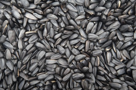 Sunflower roasted black seeds