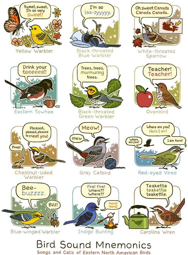 Birds of eastern North America (Illustration by Bird and Moon)