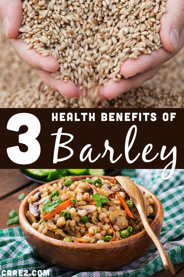 3 Important Health Benefits of Barlet (Plus Recipes)