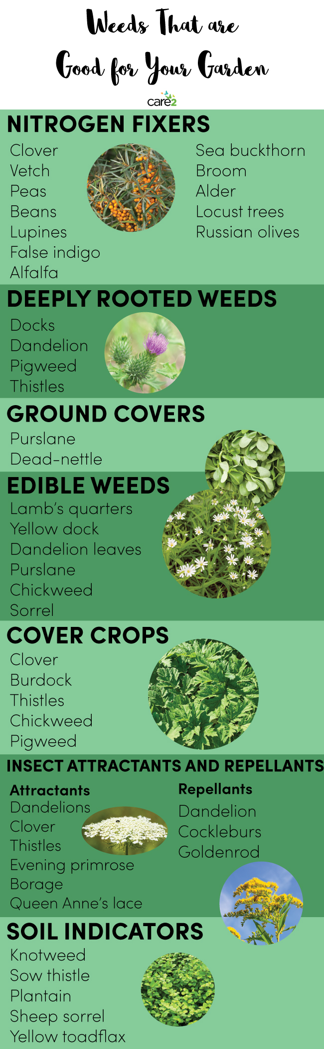 Weeds That Are Good for Your Garden