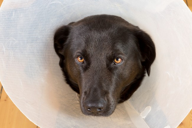 Sad dog with funnel