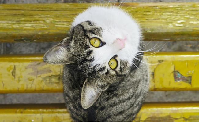 Cats Healing